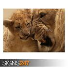 LION MOTHER CUB (3816) Animal Photo Picture Poster Print Art A0 A1 A2 A3 A4