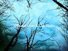 Aqua Clouds Trees Sky Contemporary Landscape Home Decor Art Matted Picture A163