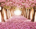 New Pink Flowers Pink Road Art Print Poster p0115