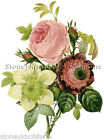 Anemone, Rose, & Clematis ~ Redoute Botanical, Flowers ~ Cross Stitch Pattern