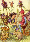 Self-Heal Fairy ~ Cicely Mary Barker ~ Cross Stitch Pattern