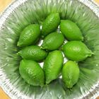Grafted Lime Citrus Trees Persian Key Kaffir Giant Finger Australian & Dwarf