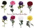 8 colors best quality single head Garden Rose for events and decoration