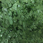 SPIRULINA FLAKE FOOD FOR TROPICAL AQUARIUM FISH ALGAE