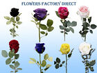 Large Deluxe Rose Bud, single tall stem 8 Colors supreme silk rose