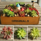 Land Lotus Garden Succulent Grass Desert Artificial Plant Arrangement