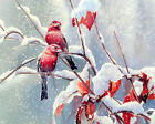 Canvas print Scarlet Finch oil painting HD printed on canvas L1659