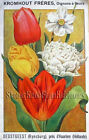 French Dutch Holland Bulbs ~ Vintage Catalog Art ~ Cross Stitch Pattern