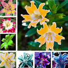 Lily Seeds,Cheap Perfume Lilies Seeds, Rare Color Flower Garden Plants_100pcs