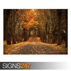 LATE AUTUMN (AD999) NATURE POSTER - Photo Picture Poster Print Art A0 to A4