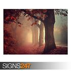RED FOREST PATH (AE061) NATURE POSTER - Photo Picture Poster Print Art A0 to A4
