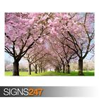 PARK PATHWAY SPRING (AE080) NATURE POSTER - Photo Poster Print Art * All Sizes