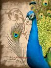 Peacock Bird Feather Blue Green Teal Turquoise Cottage Chic Matted Picture A686