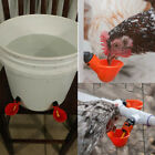 PACKS Poultry Water Drinking Cup Automatic Drinker Chicken Hen Bird Feeder