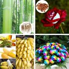 Mini Seeds Rare Blueberry Fruit Seeds Bonsai Garden Plant Banana Tree