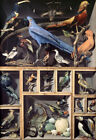 Various bird display cabinets Oil painting HD printed on canvas L1844