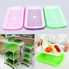 Hydroponics Basket Nursery Tray Bean Seed Germination Pot Vegetable Growing Case