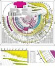Bible Timeline Chart with World History Laminated Historical Events Bibliography