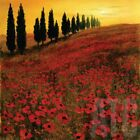 36W*x36H* POPPIES by STEVE THOMS - FIELDS OF SPRUCE SUNRISE - CHOICES of CANVAS