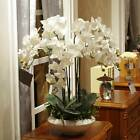 11heads Diy Artificial Fake Silk Flower Phalaenopsis Butterfly Orchid Home Decor