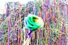 New Orleans Bead Tree Mardi Gras Aftermath Fine Art Giclee Print Tons of Beads