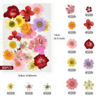 1 Pack Real Pressed Dried Flowers For Art Craft Resin Pendant Jewellery Making