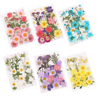 Pressed Natural Dried Flowers Mixed Color DIY Art Floral Scrapbooking Decor HOT
