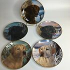 Franklin Mint Labrador Dog Plate Heirloom Series Black Yellow Chocolate 8 in