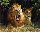 Lion Pair In Shadow Art Poster Print New