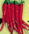"""Large Thick Red Cayenne "" Chile Pepper Seeds"