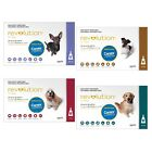 Revolution for Dogs Stop Fleas 6 pk FREE All Wormer Small, Medium or Large