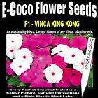 VINCA KING KONG MIX, 50 SEEDS IN EACH PACKET
