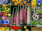 PURE WILD FLOWER SEEDS & COTTAGE ANNUALS BEE & BUTTERFLY 10g to 5kg  mix 26a