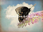 Soft Black Butterfly on Purple Flowers Signed Original Matted Photo Picture A207