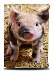 FUN CLASSIC CUTE PIG PIGLET HARD BACK CASE COVER FOR APPLE iPAD AIR 1 2