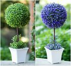 Artificial Ball Head Plastic Potted Plant Succulent Home Bridal Table Decor