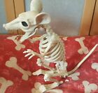 Halloween Poseable Jointed Cat/dog/rat/bird/bat/spider Skeleton Bones Decoration