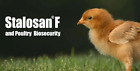 New Stalosan F Disinfectant Powder/Chicken Coops /Farms/ Stables, Stop Bird Flu