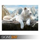 MAC OS X SNOW LEOPARD (3810) Animal Photo Picture Poster Print A0 A1 A2 A3 A4