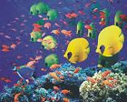 New The Color Underwater World Art Print Poster p0072