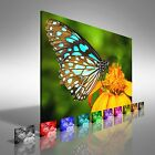 Blue Butterfly Fly In Morning Nature Canvas Print Large Picture Wall Art