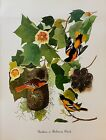 Vtg 1980's Audubon Bird Art Print Full Color Litho NESTS CHICKS *** SEE VARIETY
