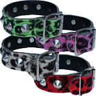 19mm Conical Studded Leopard Wristband-Punk Rockabilly Rock Party Fancy Dress