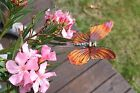 Copper & Brass Butterfly Stakes Garden, Pot or Vase Ornaments Hand Made