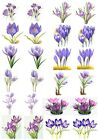 65 Mixed Crocus Flower Small Sticky White Paper Stickers Labels NEW