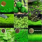 Внешний вид - Aquarium Fish Tank Plant Seeds Aquatic Water Grass Decor Garden Foreground Plant