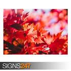 RED FOLIAGE FALL (AD971) NATURE POSTER - Photo Picture Poster Print Art A0 to A4