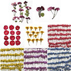 Внешний вид - 1 Pack Real Pressed Flower Dried Flowers for Arts Crafts Resin Jewelry Making