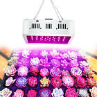 600W LED Grow Light Full Spectrum Double Chip Diodes 60 x 10W for Herbs Plants