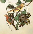 Vtg 1978 Audubon Art Print Litho Colorful Birds Blue Red Yellow ** SEE VARIETY